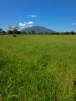 Paddyfield's and Mountain