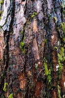 Tree Bark as Background